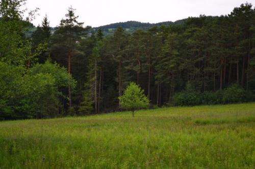 pic-strom-1