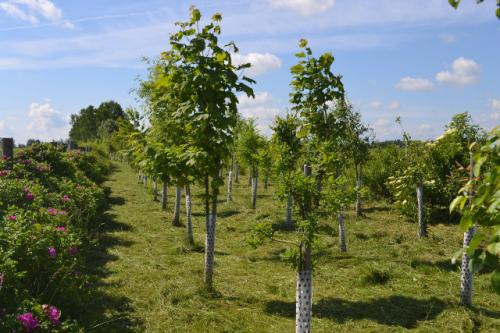 stromky-5