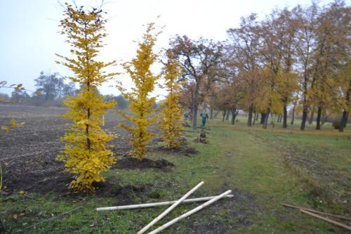stromky-8